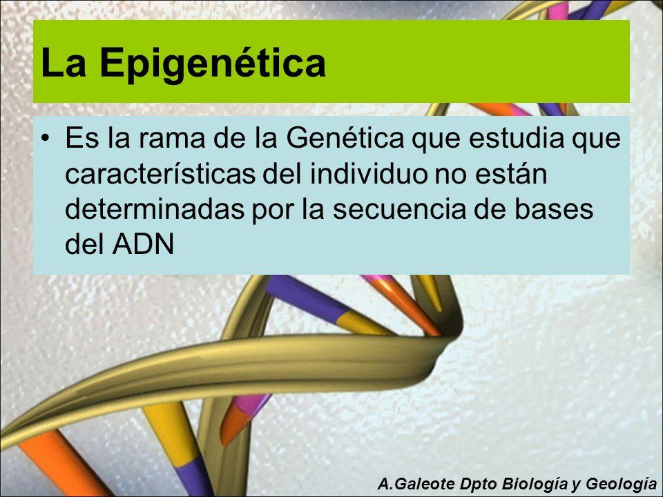 La Epigenética Es la rama de la Genética que estudia que características del individuo no están determinadas por la secuencia de bases del ADN A.Galeo