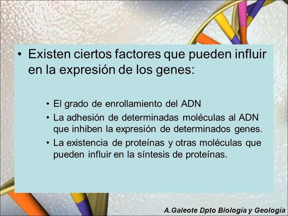 Existen ciertos factores que pueden influir en la expresión de los genes: El grado de enrollamiento del ADN La adhesión de determinadas moléculas al A