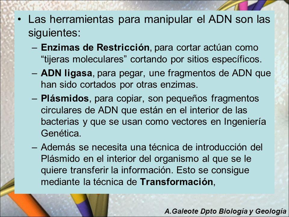 Las herramientas para manipular el ADN son las siguientes: –Enzimas de Restricción, para cortar actúan como tijeras moleculares cortando por sitios es