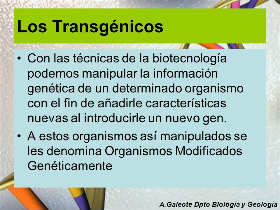 Los Transgénicos Con las técnicas de la biotecnología podemos manipular la información genética de un determinado organismo con el fin de añadirle car