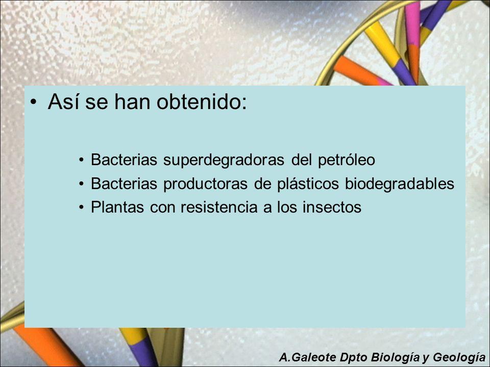 Ventajas de los Transgénicos El uso de especies modificadas genéticamente resistentes a plagas (de forma selectiva) reducirá el uso de plaguicidas (que actúan tanto sobre especies dañinas como beneficiosas).