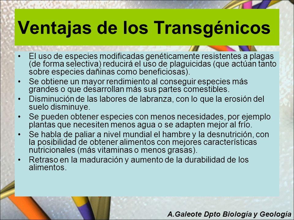 Ventajas de los Transgénicos El uso de especies modificadas genéticamente resistentes a plagas (de forma selectiva) reducirá el uso de plaguicidas (qu