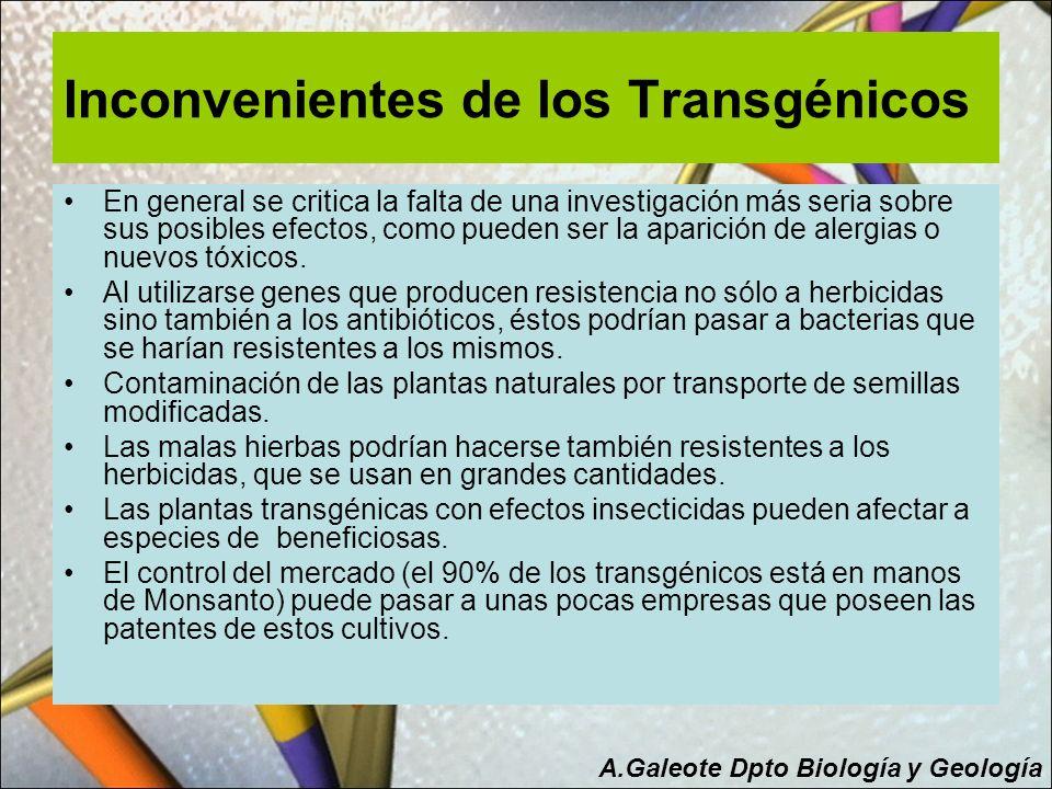 Inconvenientes de los Transgénicos En general se critica la falta de una investigación más seria sobre sus posibles efectos, como pueden ser la aparic