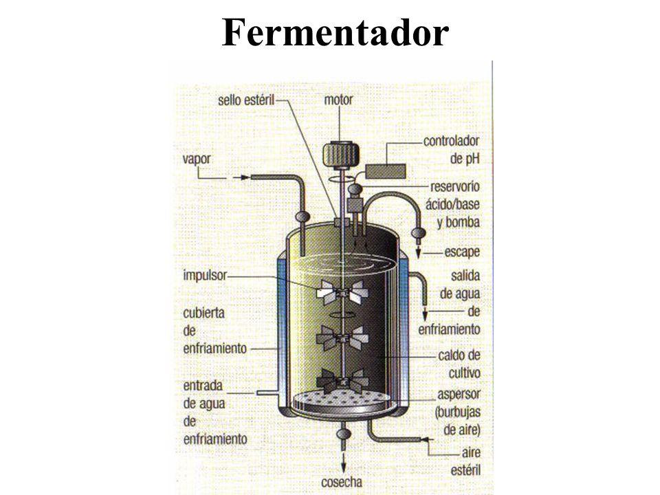 Fermentador