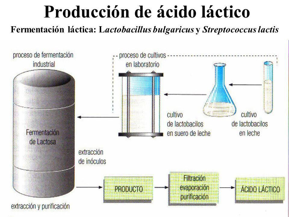 Producción de ácido láctico Fermentación láctica: Lactobacillus bulgaricus y Streptococcus lactis