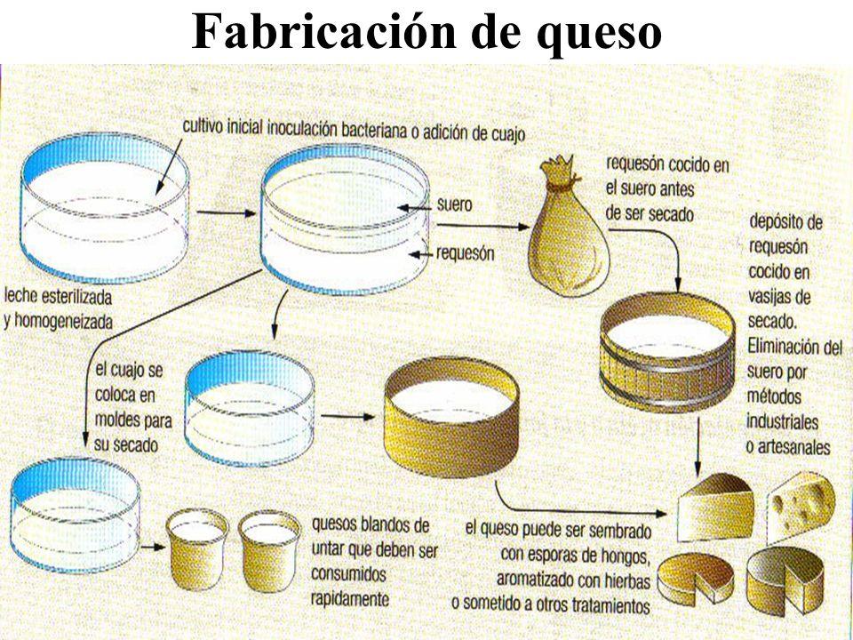 Fabricación de queso