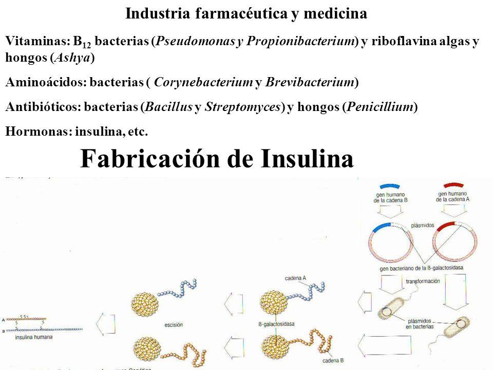 Fabricación de Insulina Industria farmacéutica y medicina Vitaminas: B 12 bacterias (Pseudomonas y Propionibacterium) y riboflavina algas y hongos (As
