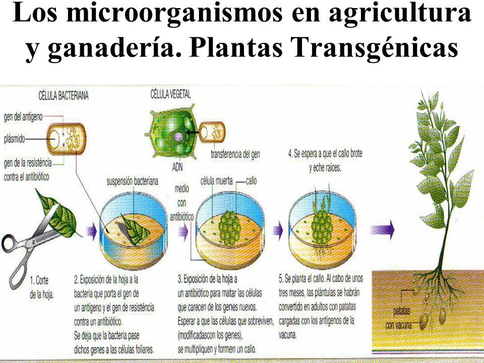 importancia de los hongos en la medicina: