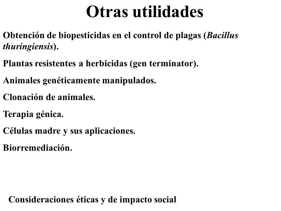 Otras utilidades Obtención de biopesticidas en el control de plagas (Bacillus thuringiensis). Plantas resistentes a herbicidas (gen terminator). Anima