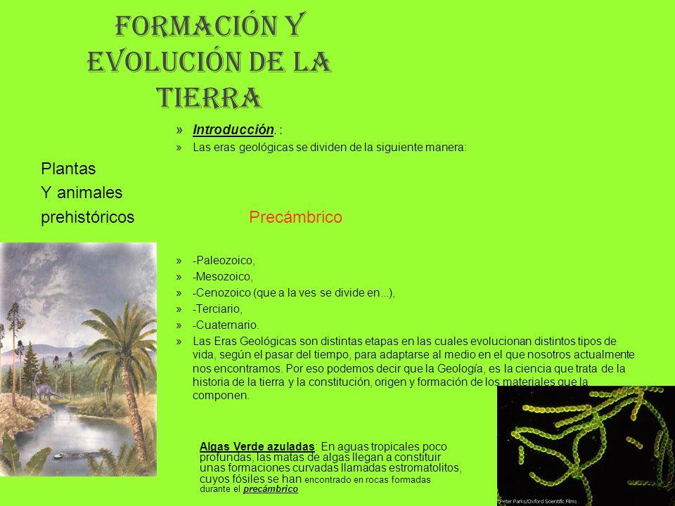 FORMACIÓN Y EVOLUCIÓN DE LA TIERRA »Introducción. : »Las eras geológicas se dividen de la siguiente manera: Plantas Y animales prehistóricos Precámbri