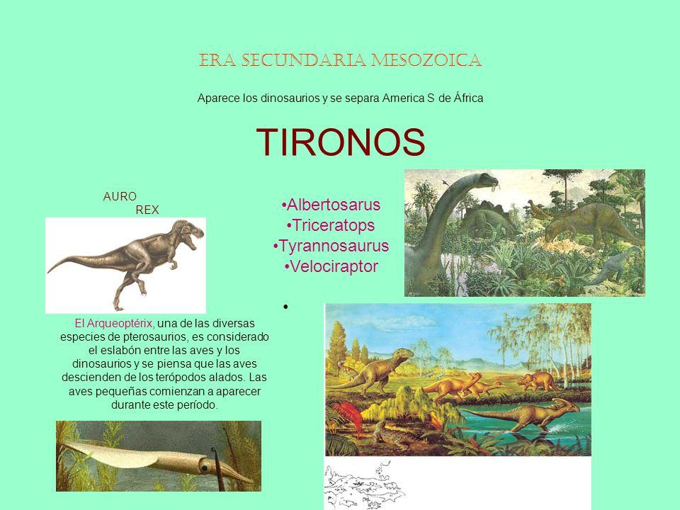 Era Secundaria Mesozoica Aparece los dinosaurios y se separa America S de África TIRONOS AURO REX Albertosarus Triceratops Tyrannosaurus Velociraptor