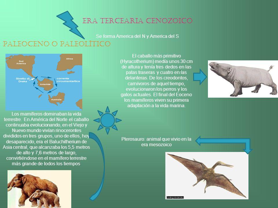 ERA TERCEARIA CENOZOICO Se forma America del N y America del S Paleoceno o Paleolítico El caballo más primitivo (Hyracotherium) medía unos 30 cm de al