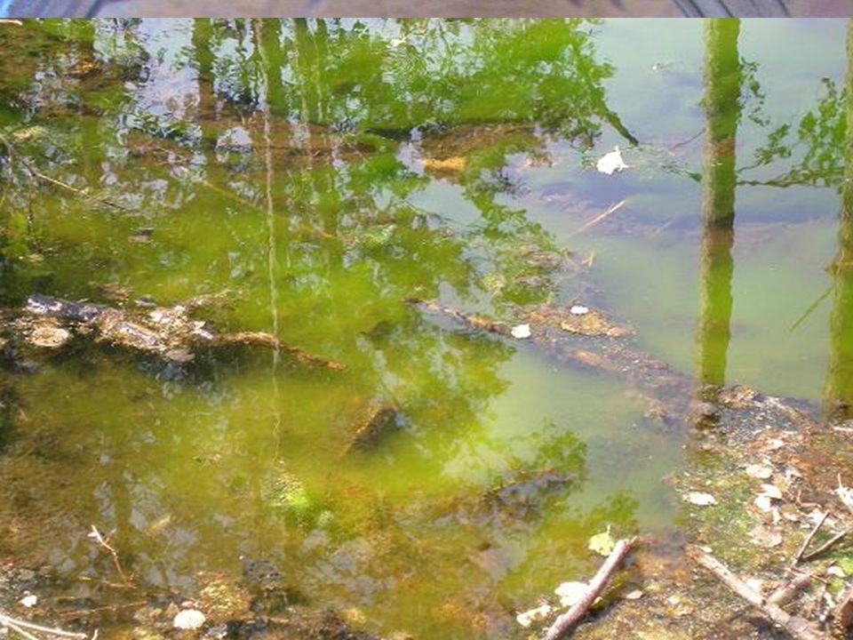 La utilización del agua en la agricultura, la ganadería, los procesos industriales o en el sector doméstico produce una serie de residuos que pueden s