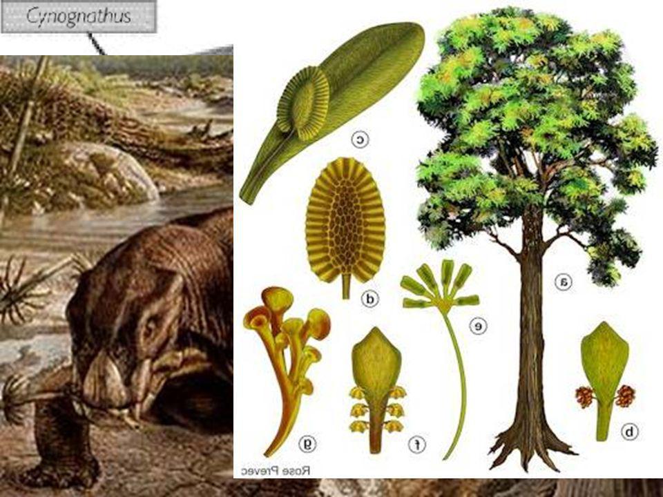PRUEBAS PALEONTOLÓGICAS Se han encontrado fósiles de organismos de la misma época en continentes que ahora están separados por océanos.