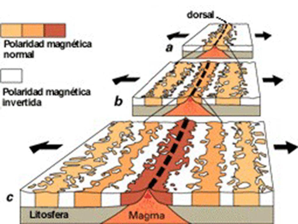 Expansión del fondo oceánico Al descubrirse las dorsales oceánicas se descubrieron varios hechos: La edad de los fondos oceánicos era muy bajas (de varios cientos de millones de años frente a los miles de millones de años de las rocas más antiguas de los continentes) La edad de los materiales de los fondos oceánicos aumentaba a medida que nos alejábamos de la dorsal.