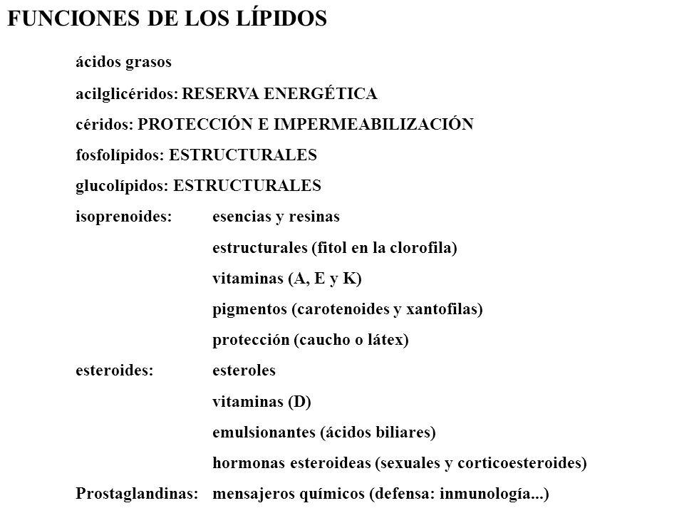 FUNCIONES DE LOS LÍPIDOS ácidos grasos acilglicéridos: RESERVA ENERGÉTICA céridos: PROTECCIÓN E IMPERMEABILIZACIÓN fosfolípidos: ESTRUCTURALES glucolí