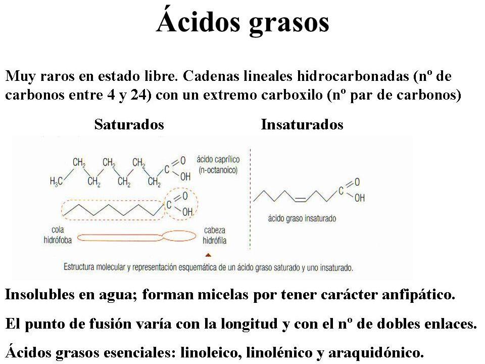 Acilglicéridos o grasas