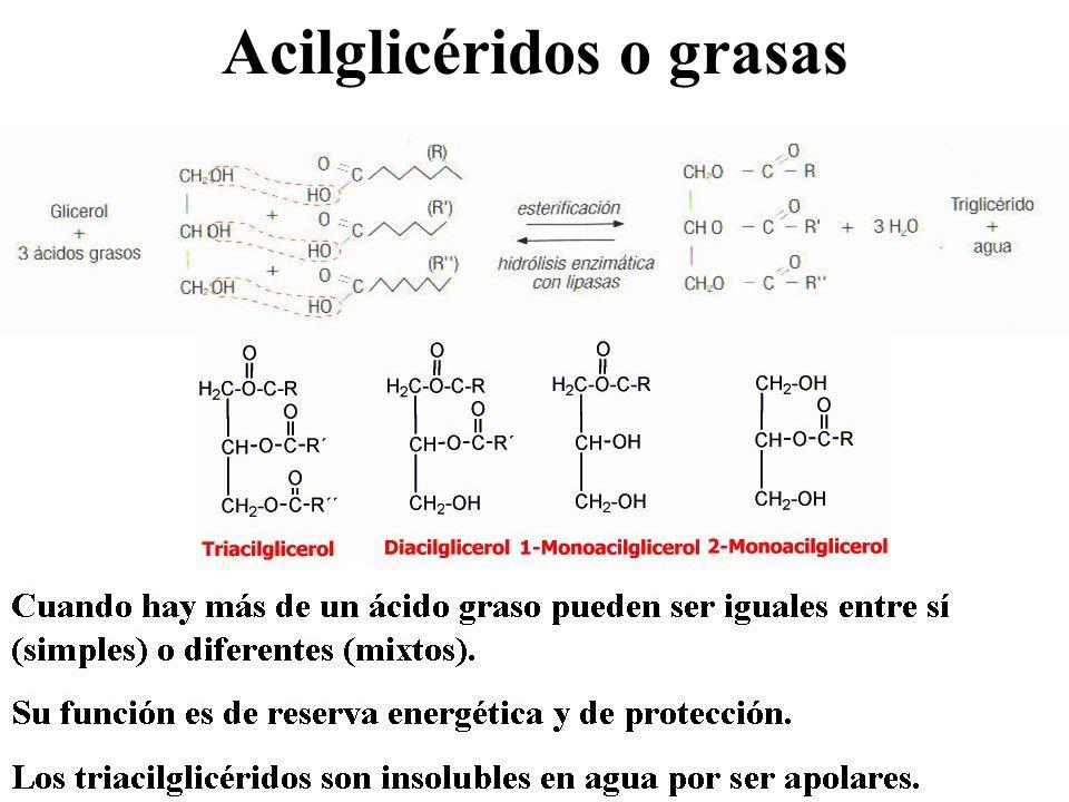 Acilglicéridos o grasas: clasificación Grasas vegetales o aceites: líquidas por presencia de ácidos grasos insaturados.
