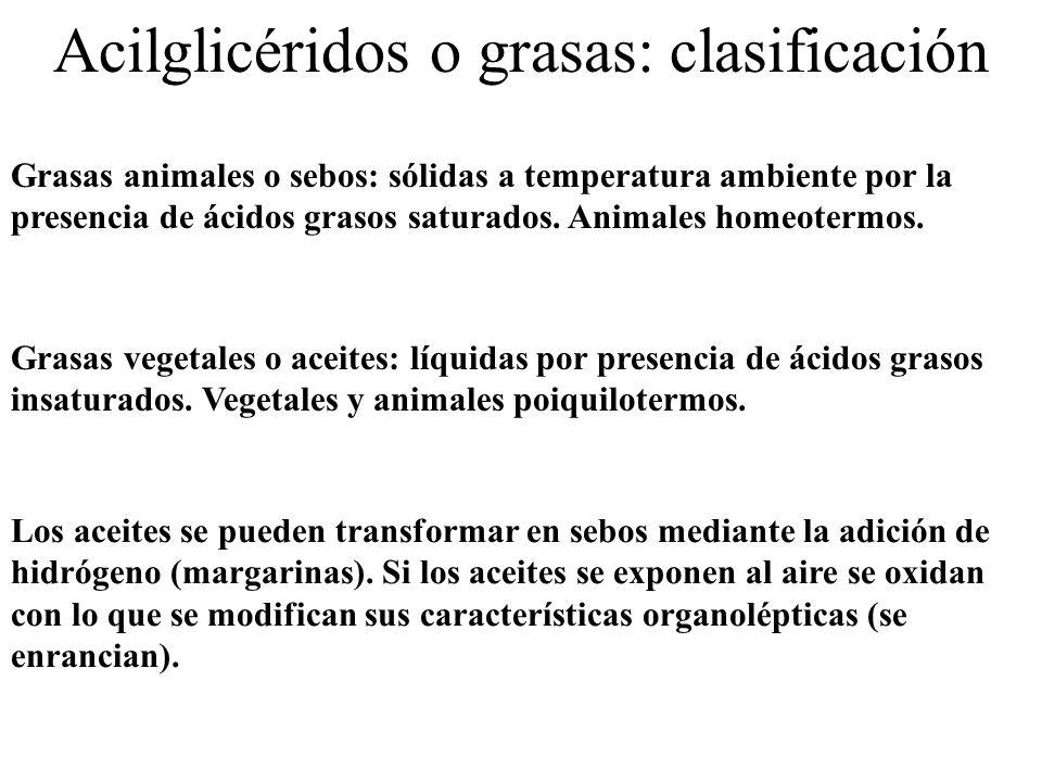 Acilglicéridos o grasas: clasificación Grasas vegetales o aceites: líquidas por presencia de ácidos grasos insaturados. Vegetales y animales poiquilot