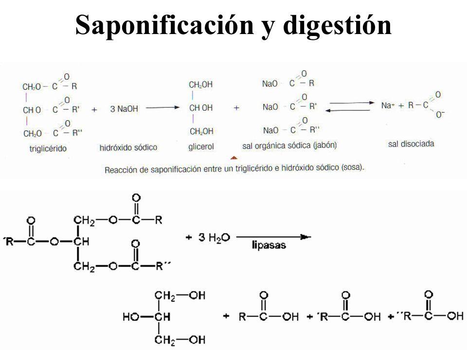 Saponificación y digestión