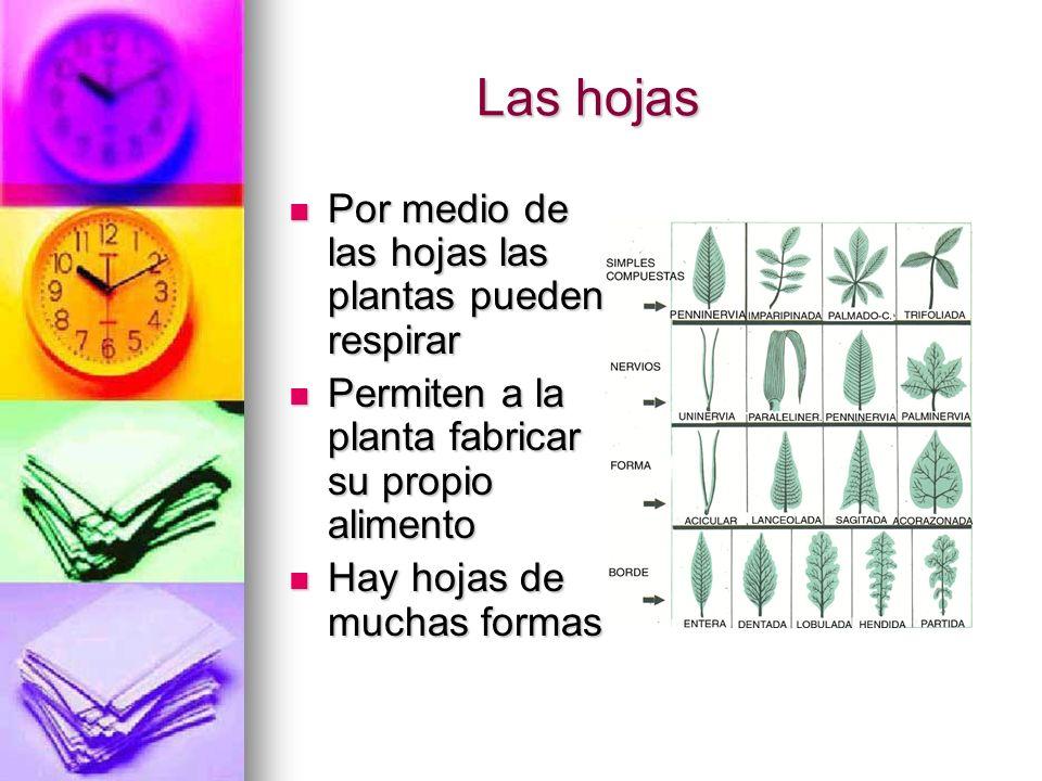 Las hojas Las hojas Por medio de las hojas las plantas pueden respirar Por medio de las hojas las plantas pueden respirar Permiten a la planta fabrica