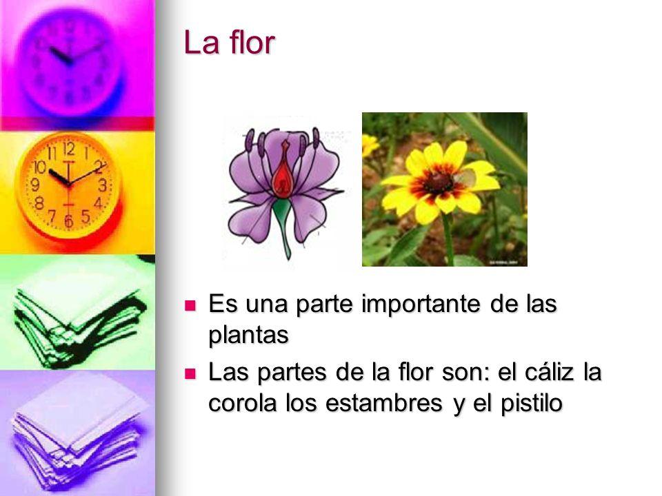 La flor Es una parte importante de las plantas Es una parte importante de las plantas Las partes de la flor son: el cáliz la corola los estambres y el