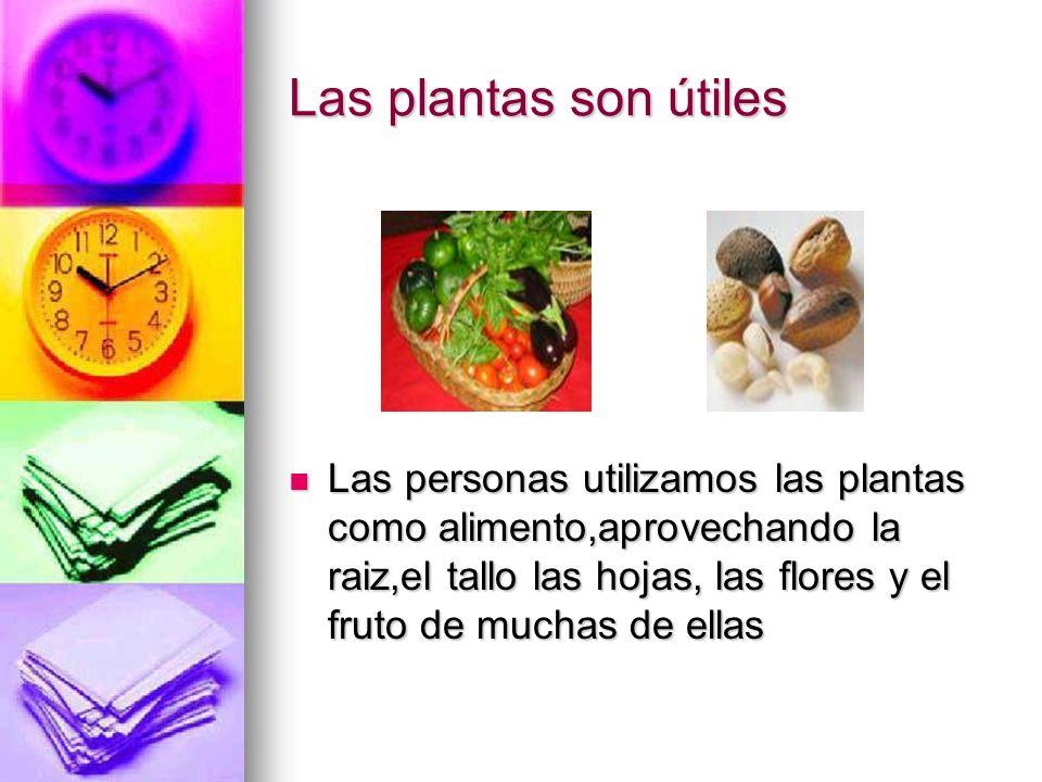 Tambien obtenemos otras cosas De las plantas sacamos alimentos También obtenemos materiales Hay plantas medicinales Las ponemos como adorno en casas y jardines