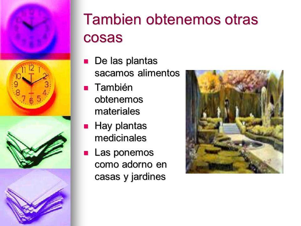 Tambien obtenemos otras cosas De las plantas sacamos alimentos También obtenemos materiales Hay plantas medicinales Las ponemos como adorno en casas y
