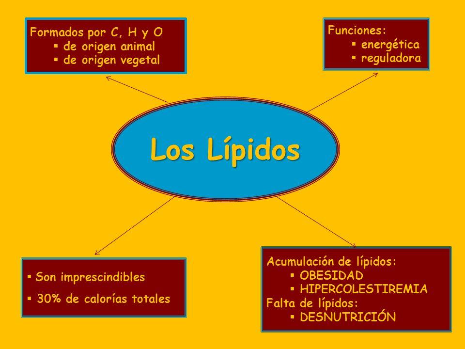 Los Lípidos Funciones: energética reguladora Formados por C, H y O de origen animal de origen vegetal Son imprescindibles 30% de calorías totales Acumulación de lípidos: OBESIDAD HIPERCOLESTIREMIA Falta de lípidos: DESNUTRICIÓN
