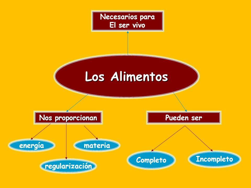 Función de los nutrientes PlásticaReguladoraEnergética Proteínas agua vitaminas lípidos carbohidratos Minerales