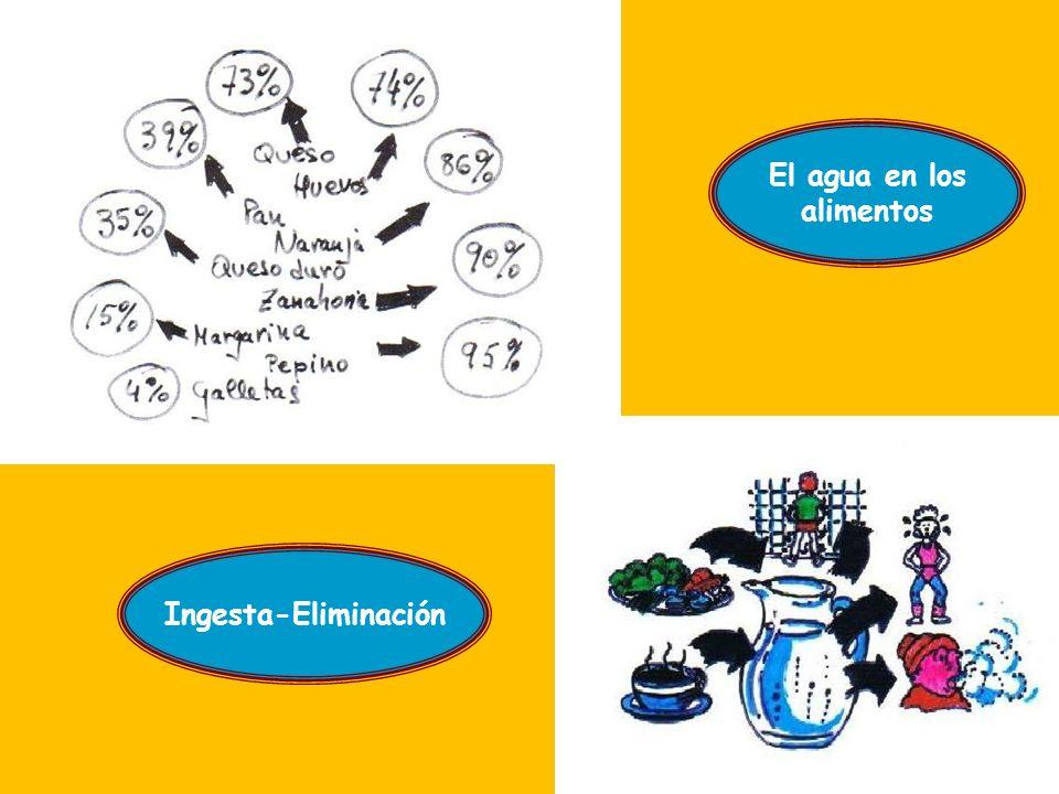 Las Proteínas Formados por C, H, O y N Son la base de: Los animales Las plantas Función: Plástica Son imprescindibles 10% de calorías totales La falta de proteínas: DESNUTRICIÓN El exceso de proteínas: exceso de residuos