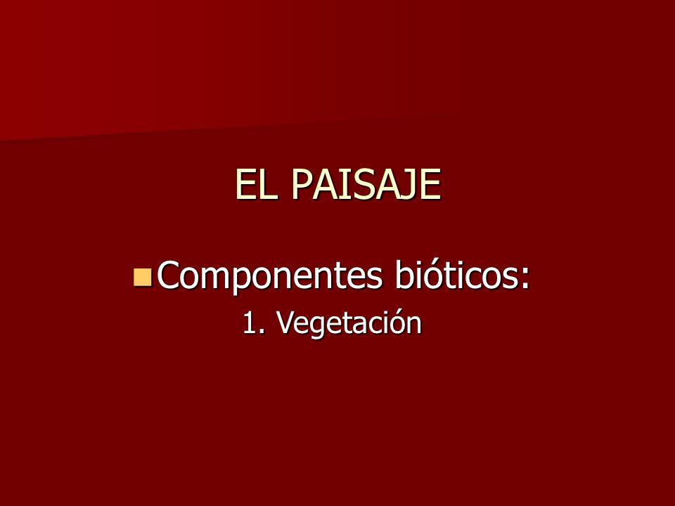EL PAISAJE Componentes bióticos: Componentes bióticos: 1. Vegetación