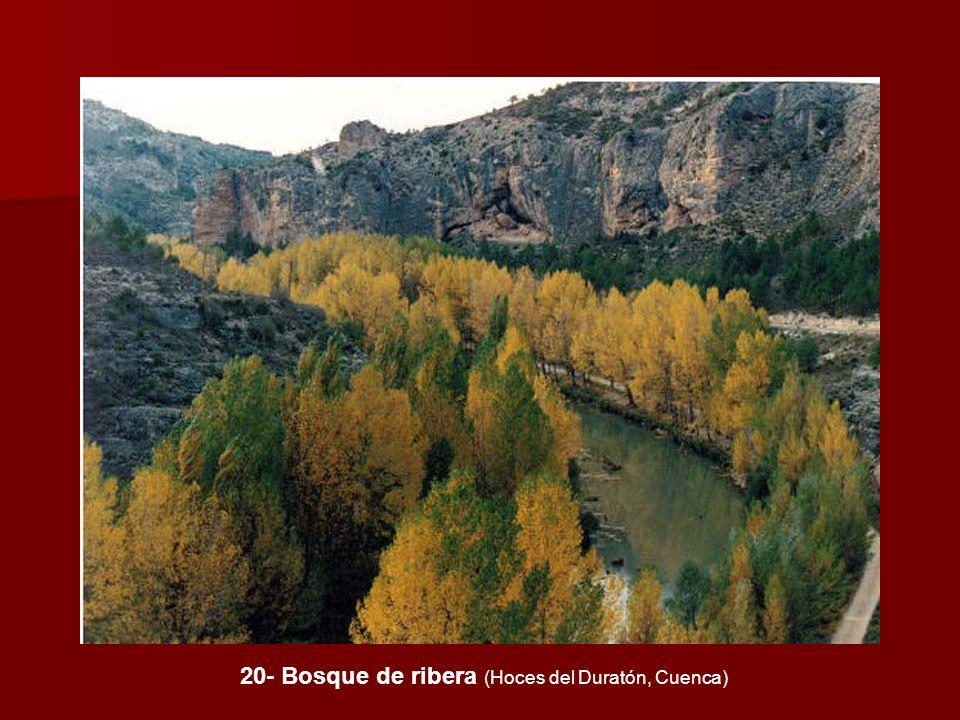 20- Bosque de ribera (Hoces del Duratón, Cuenca)