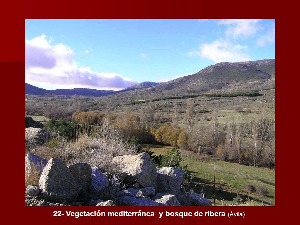 22- Vegetación mediterránea y bosque de ribera (Ávila)