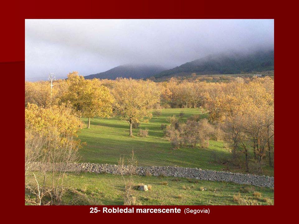 25- Robledal marcescente (Segovia)