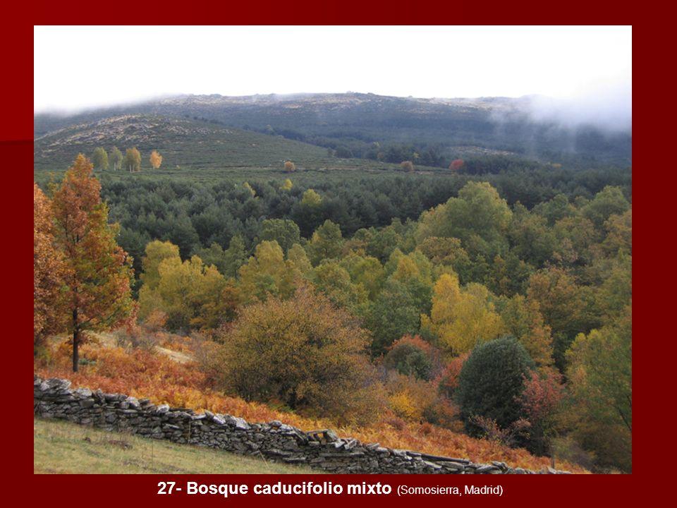 27- Bosque caducifolio mixto (Somosierra, Madrid)