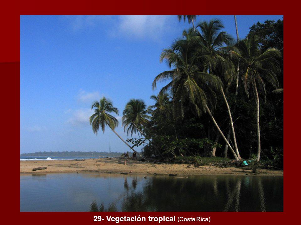 29- Vegetación tropical (Costa Rica)