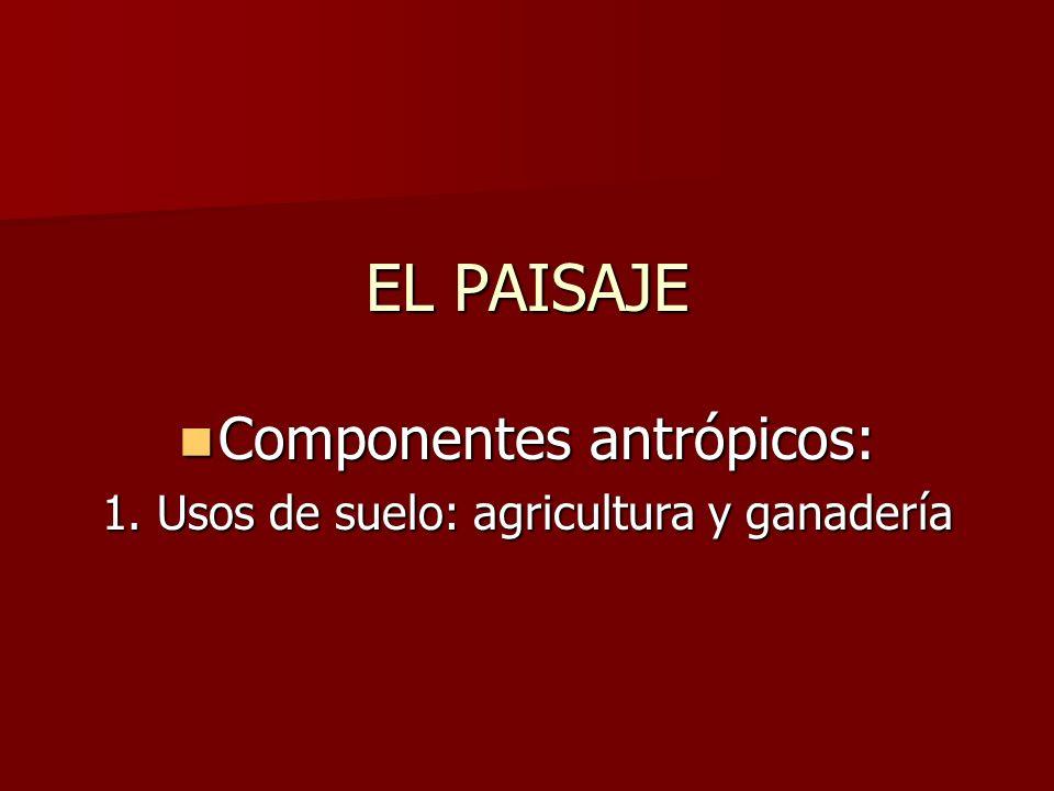 Componentes antrópicos: Componentes antrópicos: 1. Usos de suelo: agricultura y ganadería EL PAISAJE