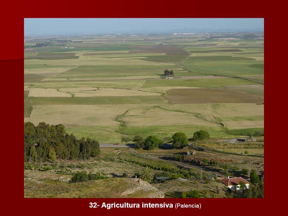 32- Agricultura intensiva (Palencia)