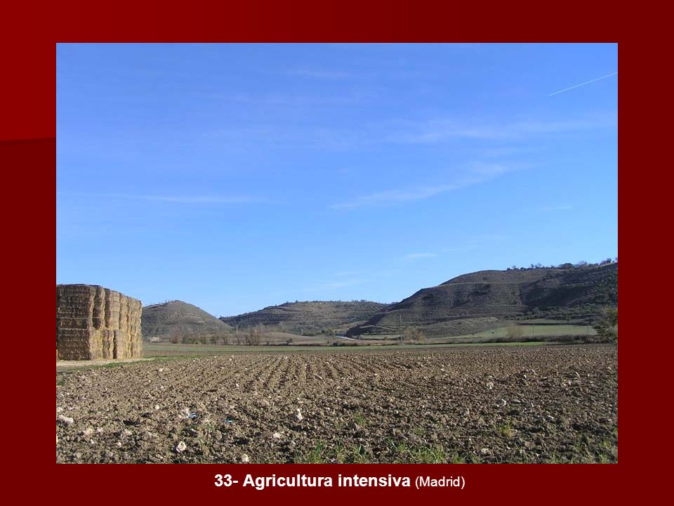 33- Agricultura intensiva (Madrid)