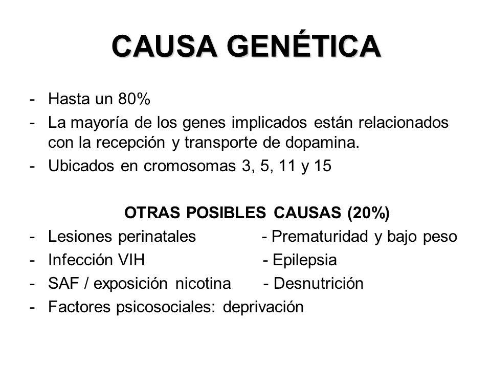 CAUSA GENÉTICA -Hasta un 80% -La mayoría de los genes implicados están relacionados con la recepción y transporte de dopamina. -Ubicados en cromosomas