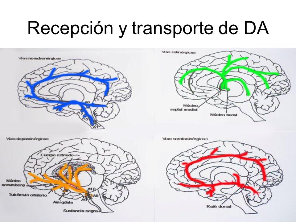 Recepción y transporte de DA
