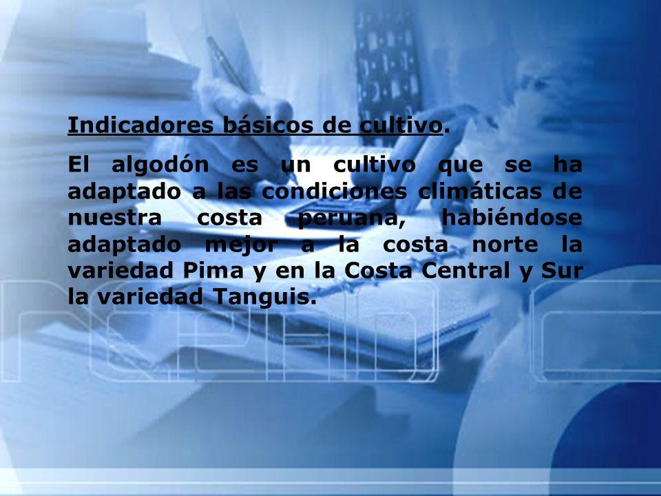 Indicadores básicos de cultivo. El algodón es un cultivo que se ha adaptado a las condiciones climáticas de nuestra costa peruana, habiéndose adaptado