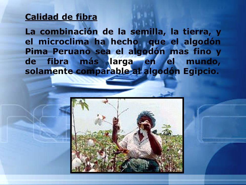 Calidad de fibra La combinación de la semilla, la tierra, y el microclima ha hecho que el algodón Pima Peruano sea el algodón mas fino y de fibra más