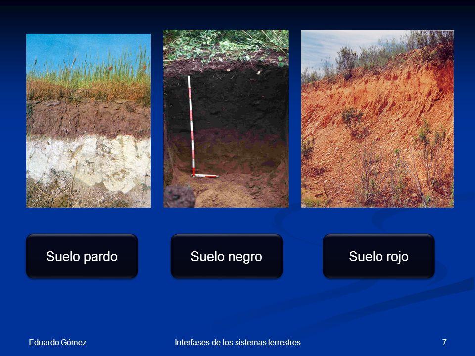 Suelos de zonas frías Eduardo Gómez 8Interfases de los sistemas terrestres Clima frío PODSOL Tierras grises o de cenizas.