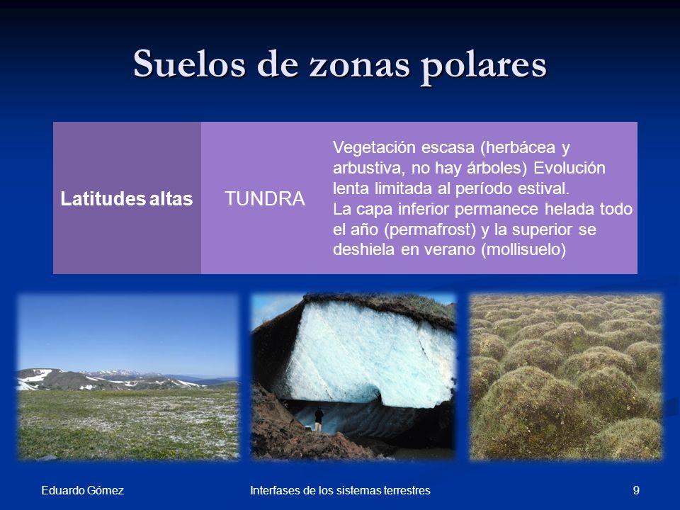 Suelos de zonas polares Eduardo Gómez 9Interfases de los sistemas terrestres Latitudes altasTUNDRA Vegetación escasa (herbácea y arbustiva, no hay árb