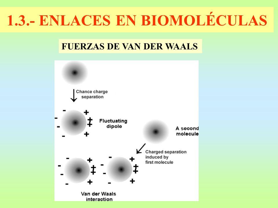 1.3.- ENLACES EN BIOMOLÉCULAS FUERZAS DE VAN DER WAALS