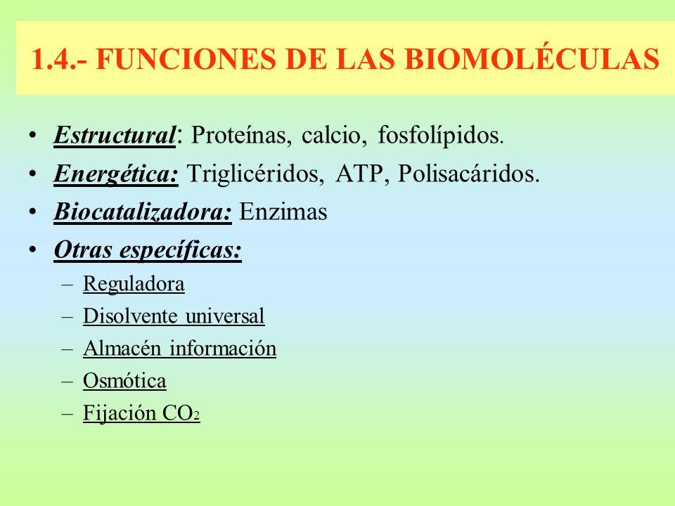 1.4.- FUNCIONES DE LAS BIOMOLÉCULAS Estructural : Proteínas, calcio, fosfolípidos. Energética: Triglicéridos, ATP, Polisacáridos. Biocatalizadora: Enz