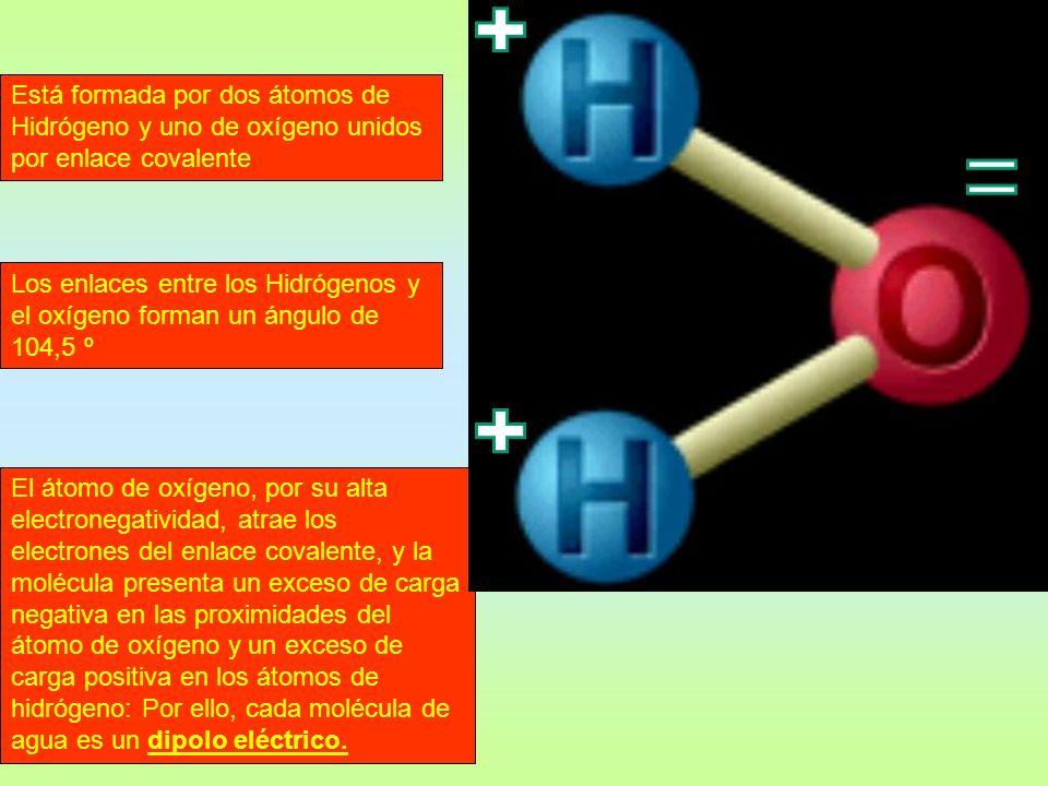 El átomo de oxígeno, por su alta electronegatividad, atrae los electrones del enlace covalente, y la molécula presenta un exceso de carga negativa en