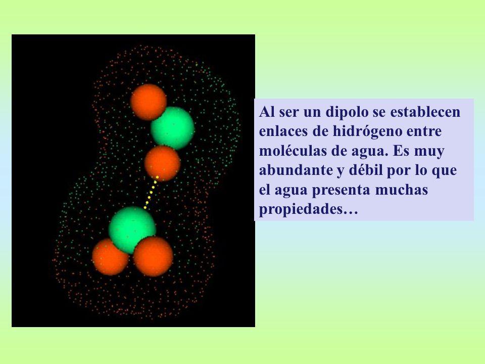 Al ser un dipolo se establecen enlaces de hidrógeno entre moléculas de agua. Es muy abundante y débil por lo que el agua presenta muchas propiedades…